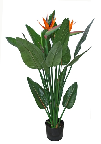 Strelitzia Plant w pot 120 cm Grn Orange